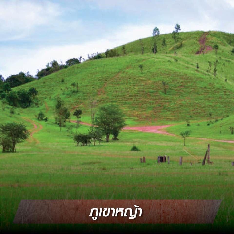 ภูเขาหญ้าระนอง