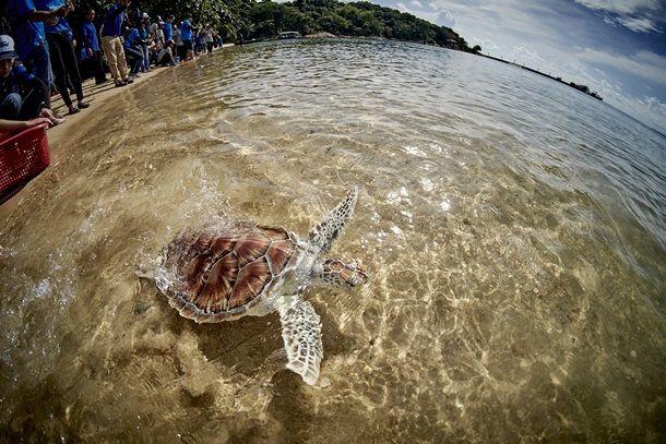 Ford Sea Turtle_09