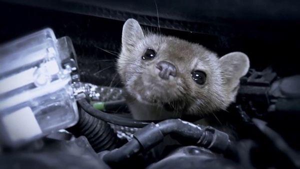 ใส่ใจทุกรายละเอียด Audi ตั้งกล้องดูสัตว์กัดแทะห้องเครื่องยนต์ ก่อนวางแผนรับมือ