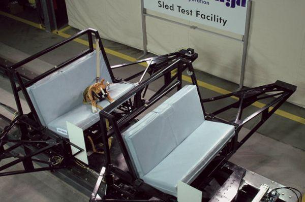 """Subaru เอาใจคนรักสัตว์ ลงทุนวิจัยความปลอดภัยของ """"สุนัขในห้องโดยสาร"""""""