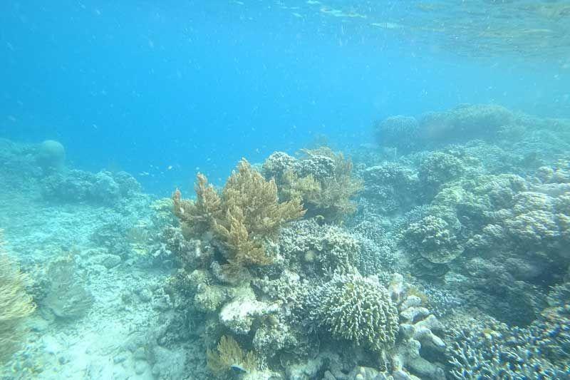 Pemandangan bawah laut pulau tujuh