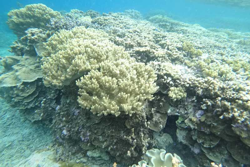 Dunia bawah laut Pulau Tujuh